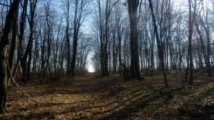 Lepa staza kroz šumu (foto Ivan Sokolović)
