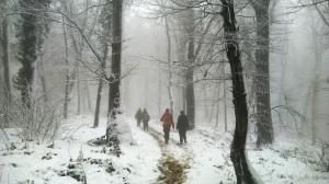 Snežna jesen fruškogorska