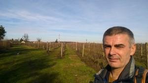 Vinogradi tamo negde pre Molovina