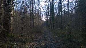 Šume negde posle Molovina